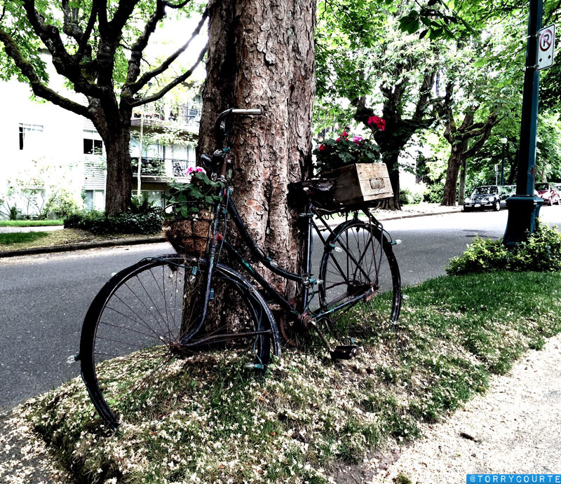 Bicycle Flower Planter Torry Courte Images And Photo Blog
